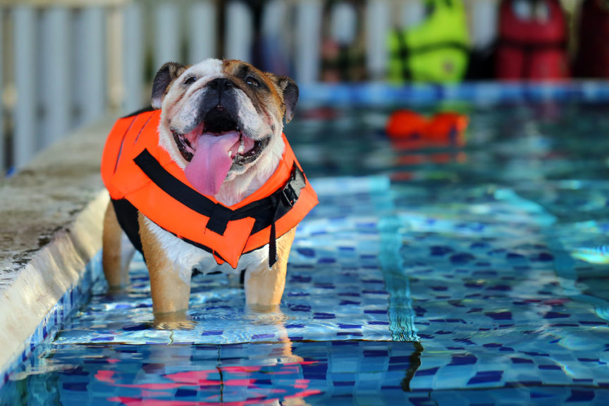 Dogs and Swimming Pools - Mid City Custom Pools